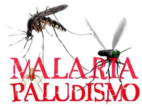 Paludismo: día mundial