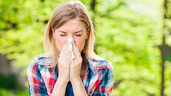 Alergia-1920-1024x576